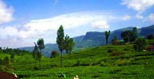 Mathurata Plantation